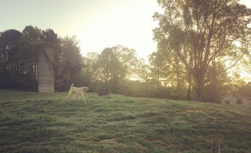 A North Carolina sunset over the lush landscape of Wells Farm, brings the day to a beautiful close.