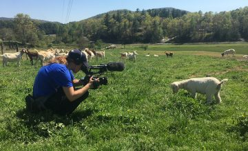 My Home, NC photographer becomes one with the goats in order to capture them in their natural habitat.